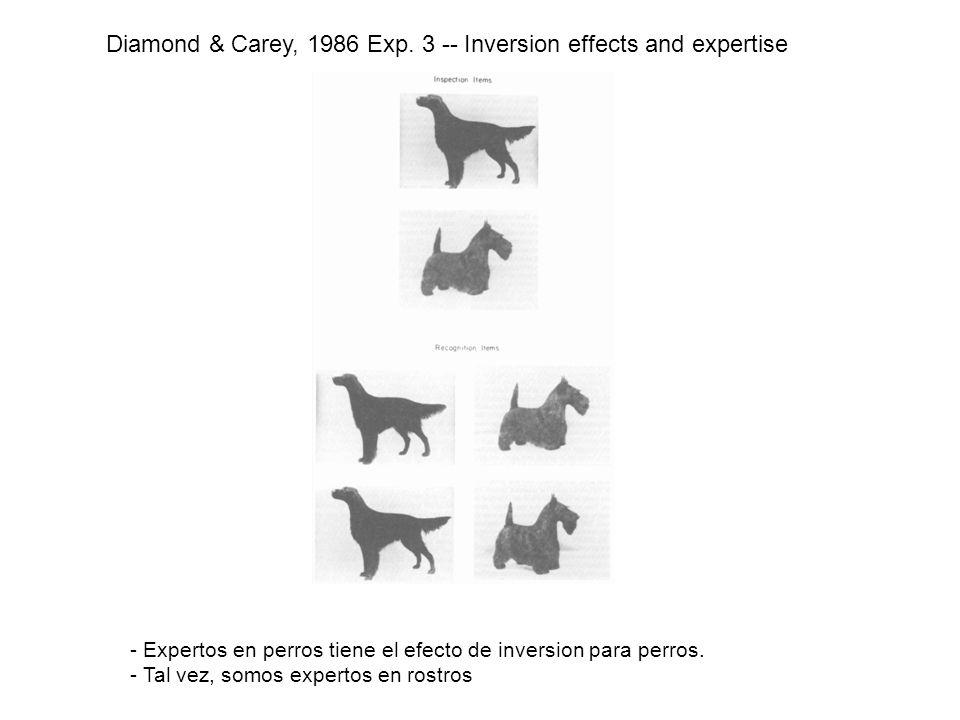 Diamond & Carey, 1986 Exp. 3 -- Inversion effects and expertise - Expertos en perros tiene el efecto de inversion para perros. - Tal vez, somos expert