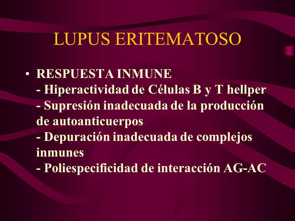 LUPUS ERITEMATOSO RESPUESTA INMUNE - Hiperactividad de Células B y T hellper - Supresión inadecuada de la producción de autoanticuerpos - Depuración i