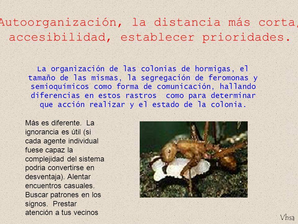 Vhsa Autoorganización, la distancia más corta, accesibilidad, establecer prioridades. La organización de las colonias de hormigas, el tamaño de las mi