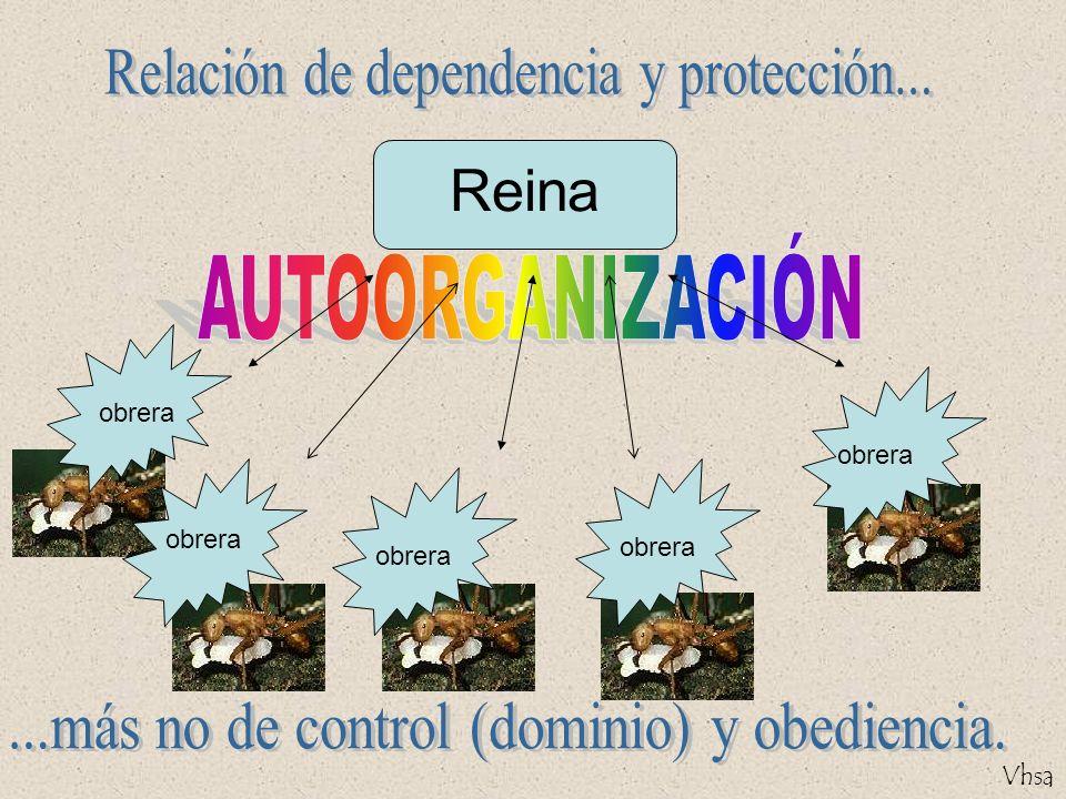 Vhsa La conducta de cada unidad no está encapsulada dentro de esa unidad sino que resulta de las conexiones con el resto del sistema.