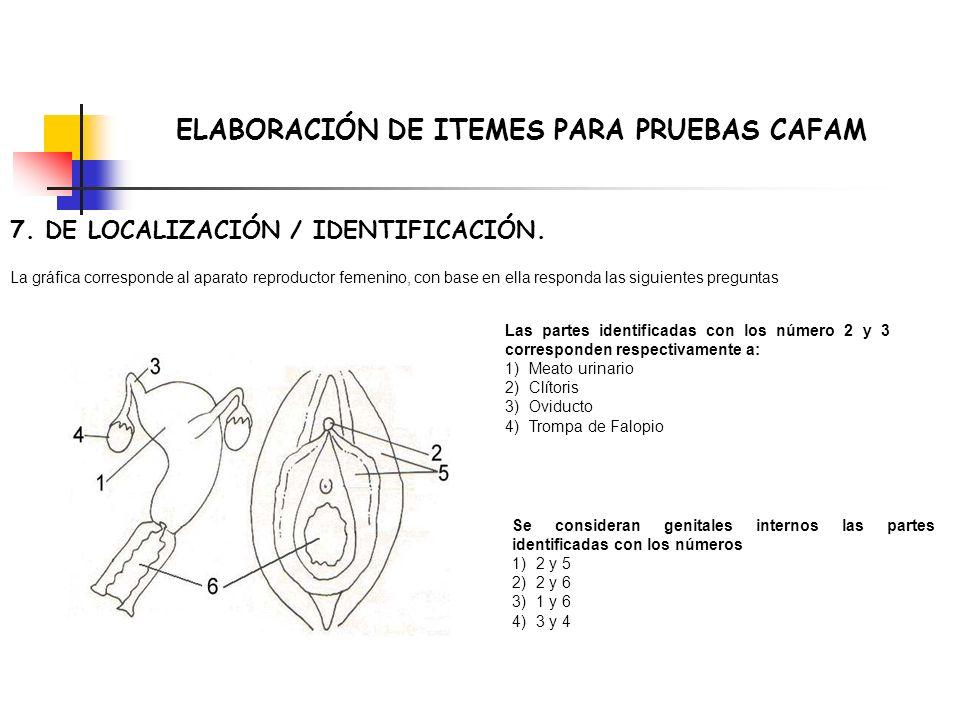ELABORACIÓN DE ITEMES PARA PRUEBAS CAFAM 7. DE LOCALIZACIÓN / IDENTIFICACIÓN. La gráfica corresponde al aparato reproductor femenino, con base en ella