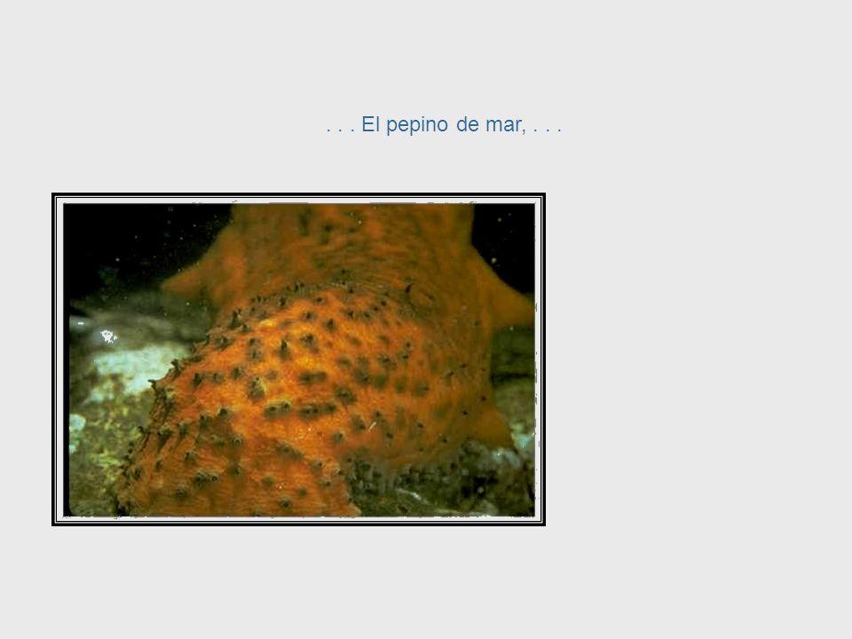 En contraste, animales como la estrella de mar.. Starfish System