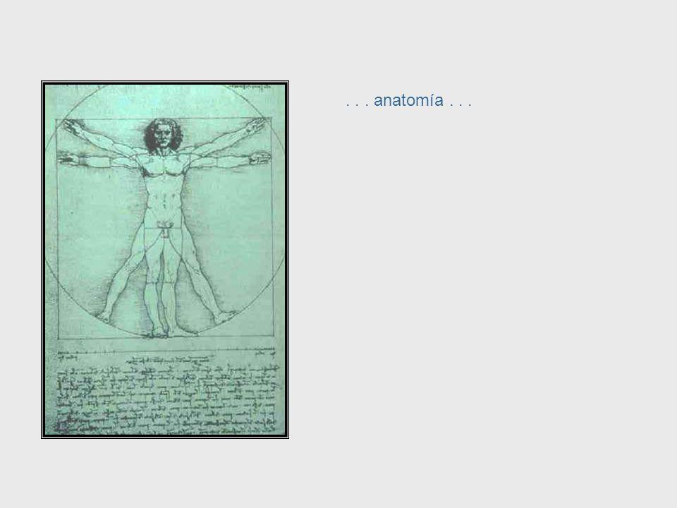 ... escultura... Da Vinci, cont. – Sculpture