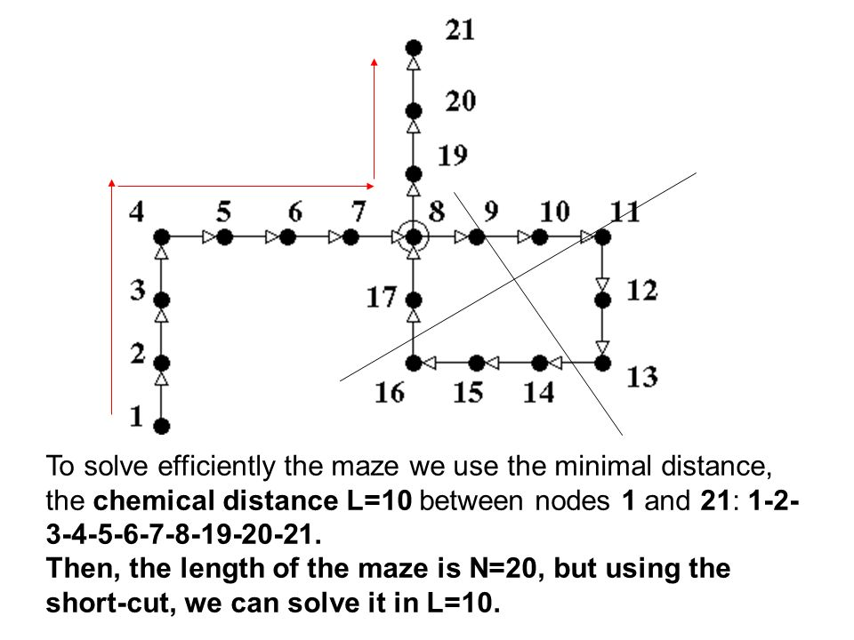 To solve efficiently the maze we use the minimal distance, the chemical distance L=10 between nodes 1 and 21: 1-2- 3-4-5-6-7-8-19-20-21.