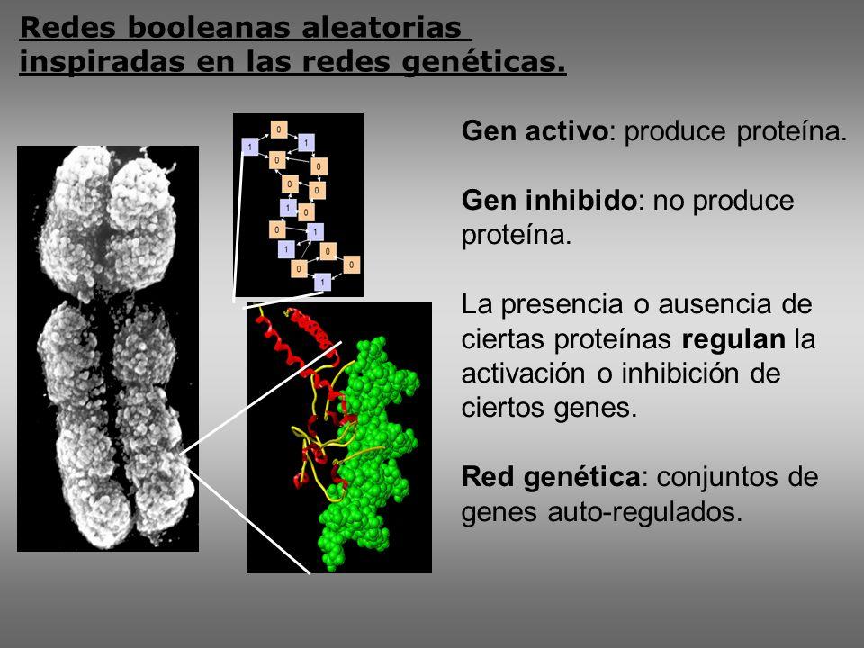 Redes booleanas aleatorias inspiradas en las redes genéticas.