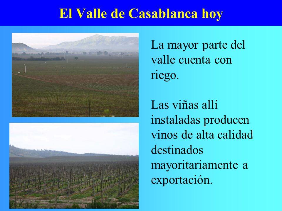 El Valle de Casablanca hoy La mayor parte del valle cuenta con riego. Las viñas allí instaladas producen vinos de alta calidad destinados mayoritariam