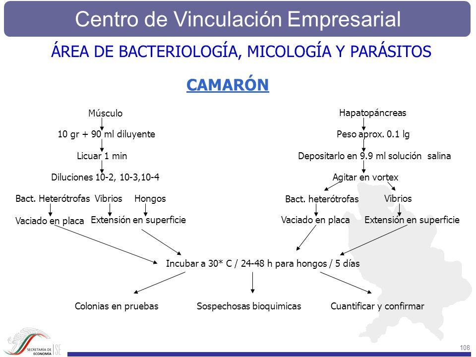 Centro de Vinculación Empresarial 108 CAMARÓN Músculo Hapatopáncreas 10 gr + 90 ml diluyente Licuar 1 min Diluciones 10-2, 10-3,10-4 Bact. Heterótrofa