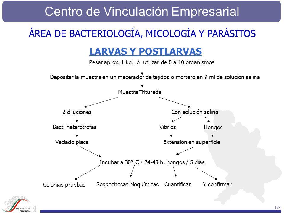 Centro de Vinculación Empresarial 109 LARVAS Y POSTLARVAS Pesar aprox. 1 kg. ó utilizar de 8 a 10 organismos Depositar la muestra en un macerador de t