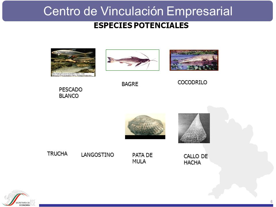 Centro de Vinculación Empresarial 77 STADÍSTICAS E SERVICIOS DEL CENTRO PRODUCCIÓN ACUÍCOLA POR: ESPECIE.