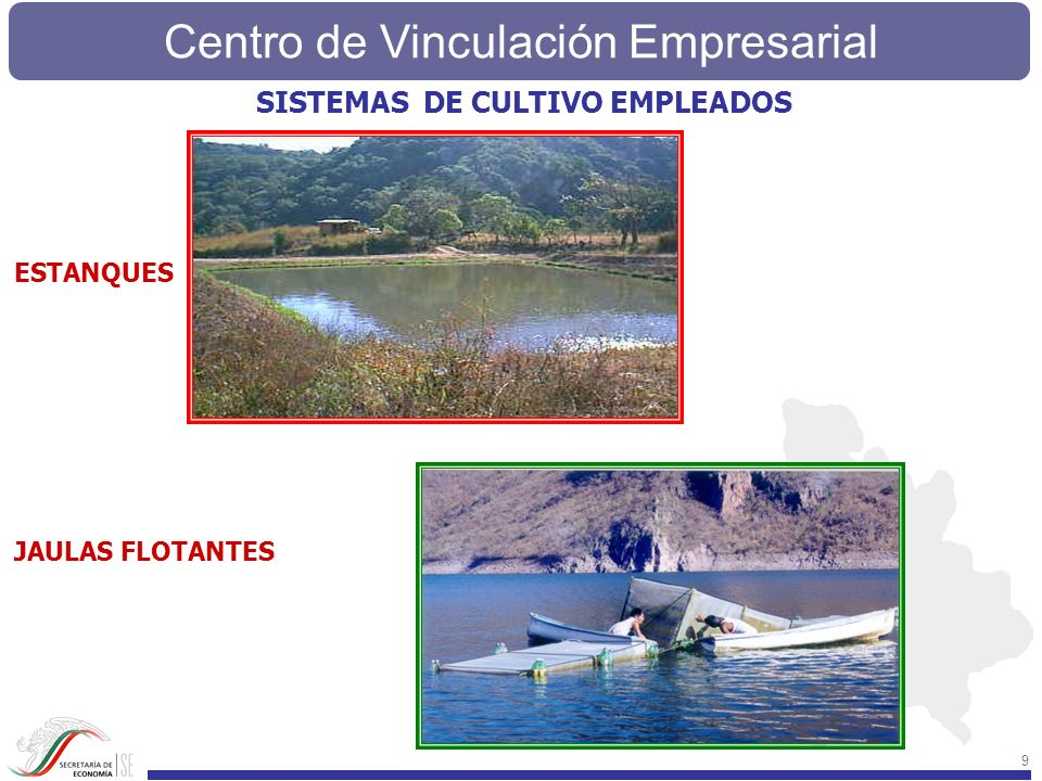 Centro de Vinculación Empresarial 9 SISTEMAS DE CULTIVO EMPLEADOS JAULAS FLOTANTES ESTANQUES