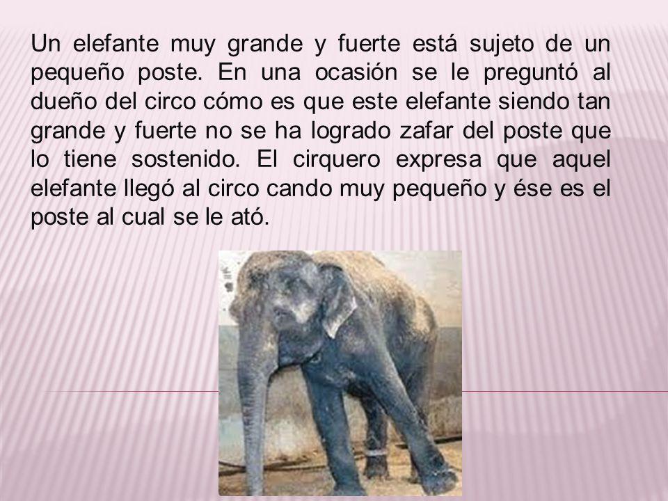Un elefante muy grande y fuerte está sujeto de un pequeño poste. En una ocasión se le preguntó al dueño del circo cómo es que este elefante siendo tan