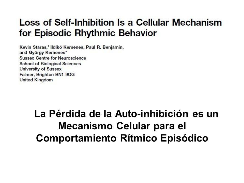 La Pérdida de la Auto-inhibición es un Mecanismo Celular para el Comportamiento Rítmico Episódico