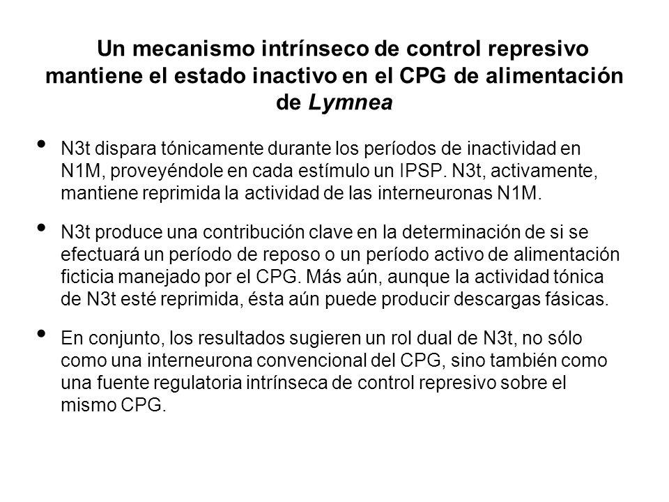 Un mecanismo intrínseco de control represivo mantiene el estado inactivo en el CPG de alimentación de Lymnea N3t dispara tónicamente durante los perío