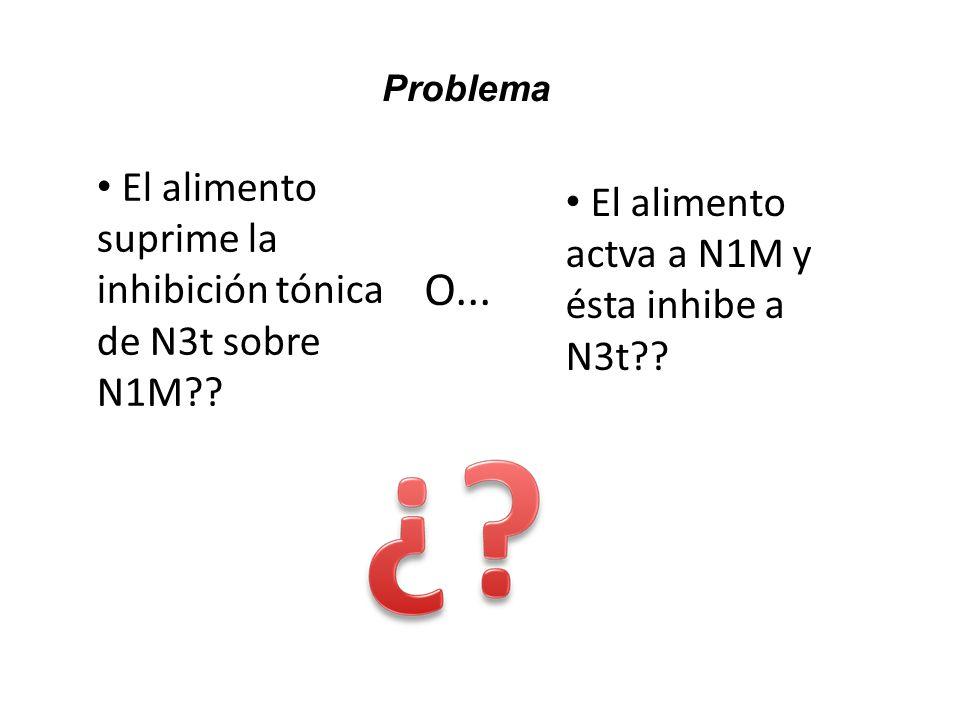 Problema El alimento suprime la inhibición tónica de N3t sobre N1M?? O... El alimento actva a N1M y ésta inhibe a N3t??