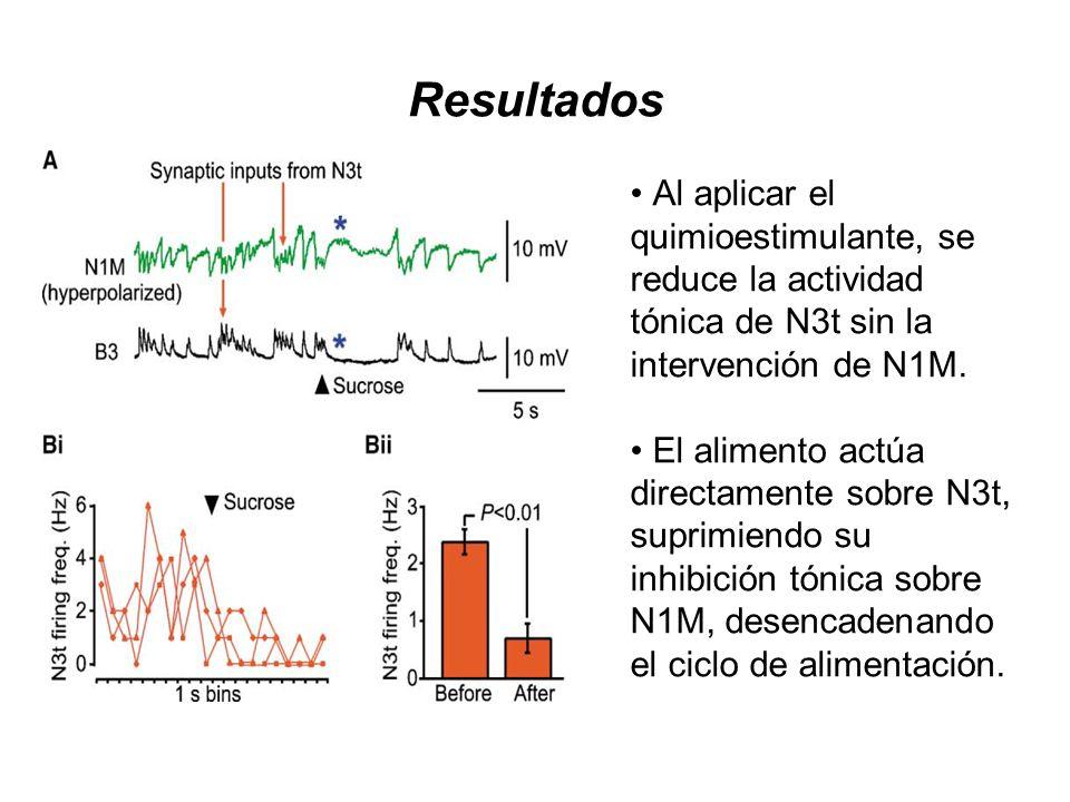 Resultados Al aplicar el quimioestimulante, se reduce la actividad tónica de N3t sin la intervención de N1M. El alimento actúa directamente sobre N3t,