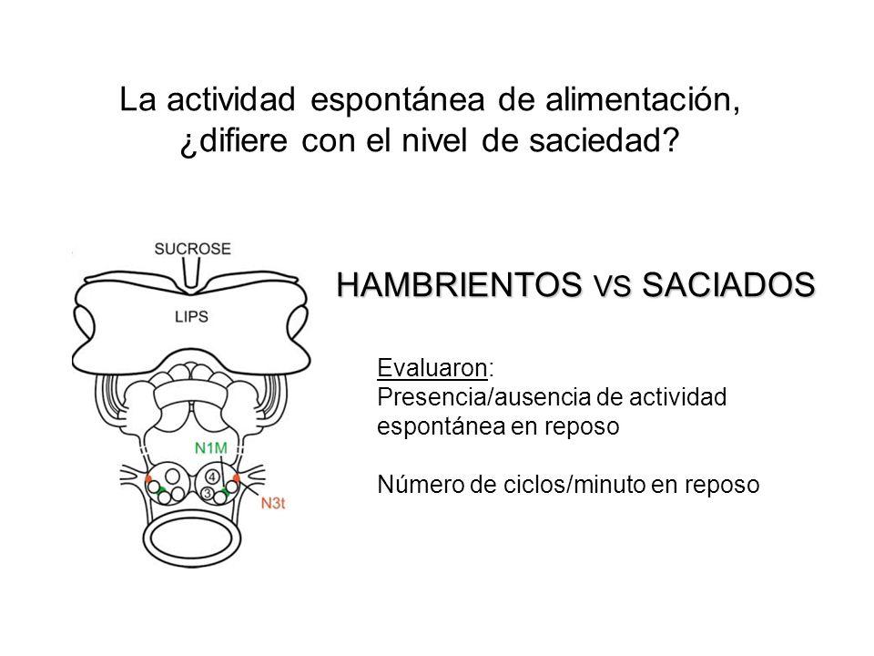 La actividad espontánea de alimentación, ¿difiere con el nivel de saciedad? HAMBRIENTOS VS SACIADOS Evaluaron: Presencia/ausencia de actividad espontá