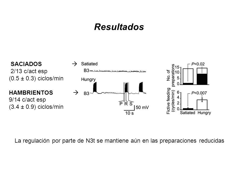 Resultados SACIADOS 2/13 c/act esp (0.5 ± 0.3) ciclos/min HAMBRIENTOS 9/14 c/act esp (3.4 ± 0.9) ciclos/min La regulación por parte de N3t se mantiene