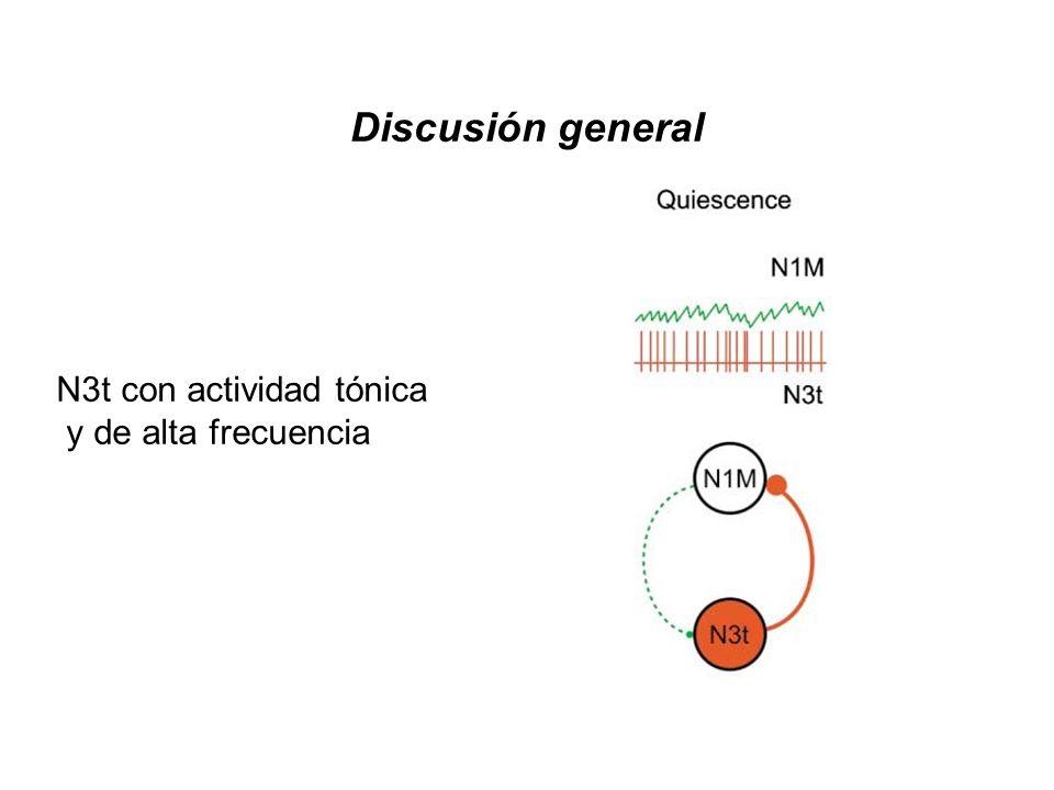N3t con actividad tónica y de alta frecuencia Discusión general