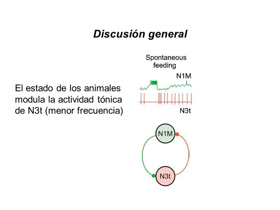 El estado de los animales modula la actividad tónica de N3t (menor frecuencia) Discusión general