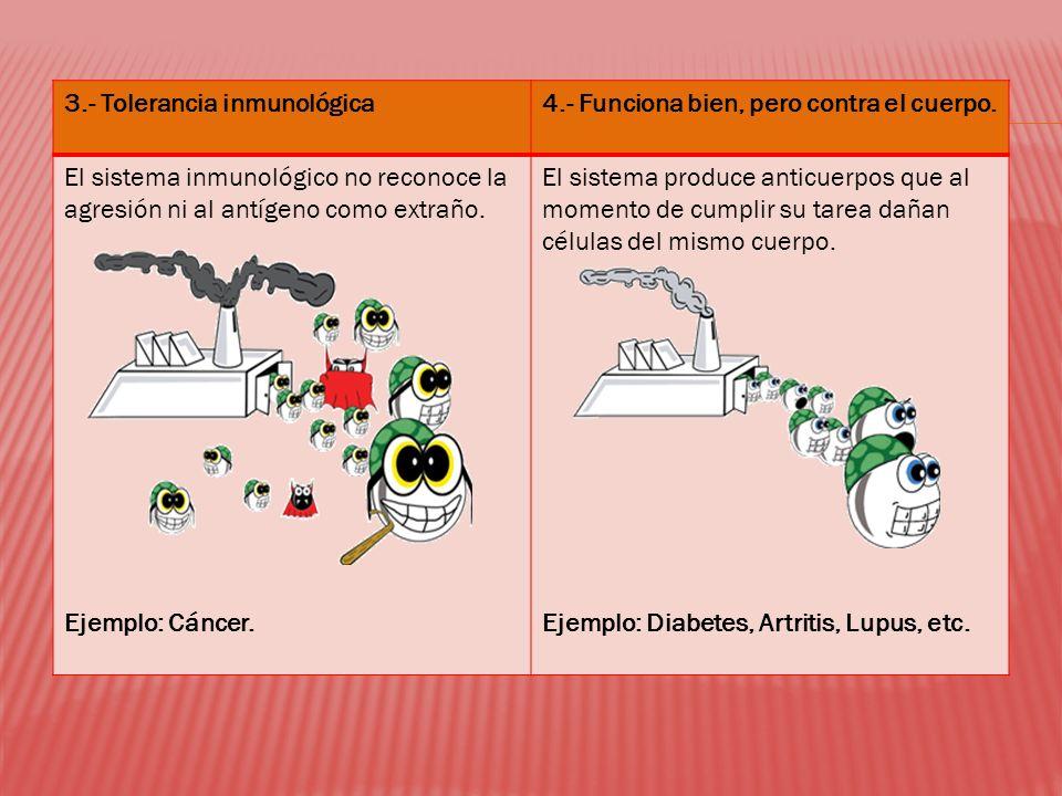 3.- Tolerancia inmunológica4.- Funciona bien, pero contra el cuerpo. El sistema inmunológico no reconoce la agresión ni al antígeno como extraño. Ejem