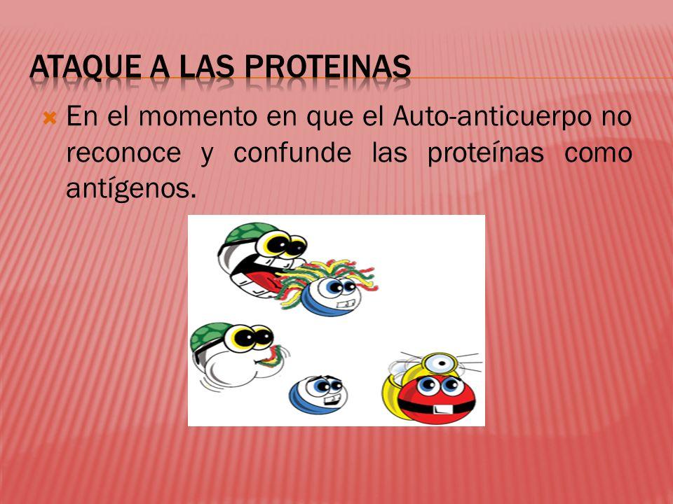 En el momento en que el Auto-anticuerpo no reconoce y confunde las proteínas como antígenos.