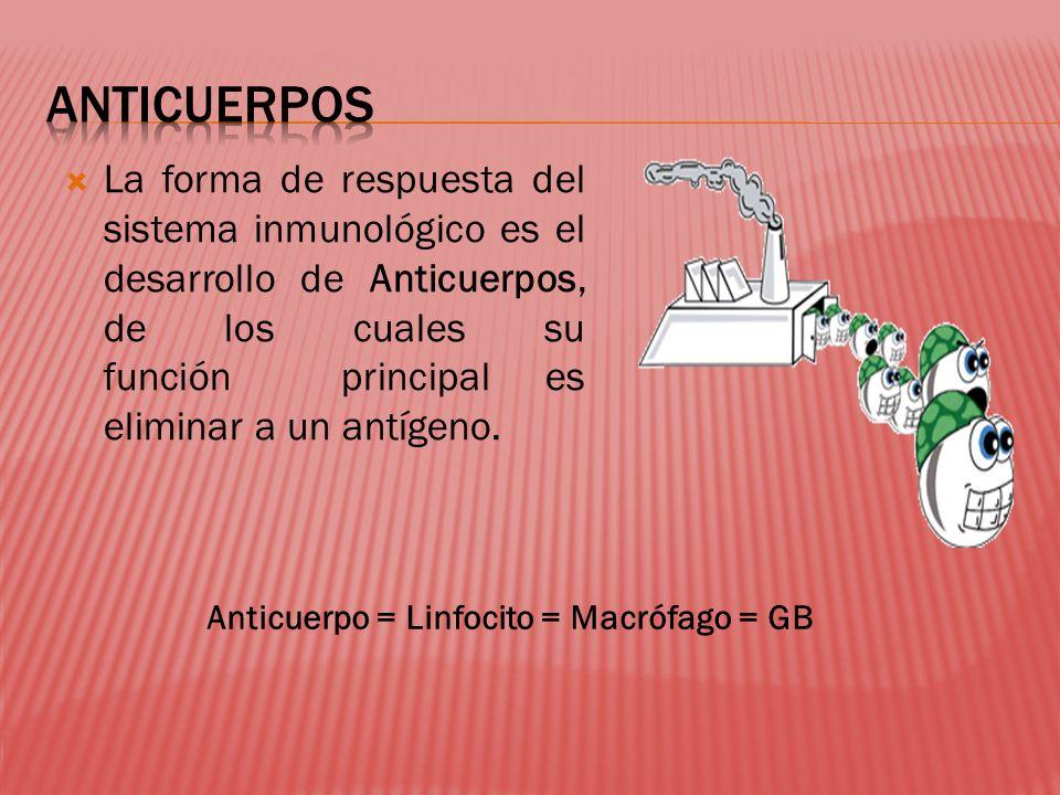 La forma de respuesta del sistema inmunológico es el desarrollo de Anticuerpos, de los cuales su función principal es eliminar a un antígeno. Anticuer