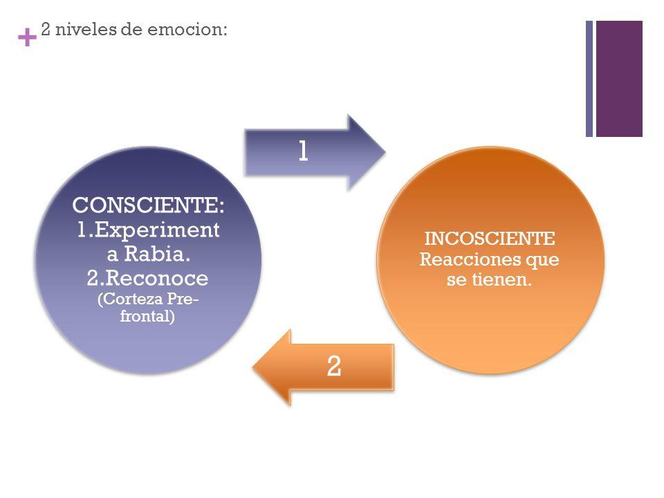 + CONSCIENTE: 1.Experimenta Rabia. 2.Reconoce (Corteza Pre- frontal) 1 INCOSCIENTE Reacciones que se tienen. 2 2 niveles de emocion: