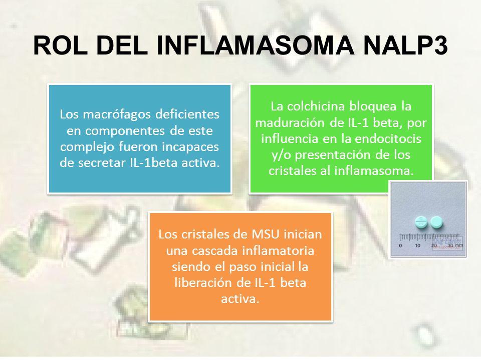 ROL DEL INFLAMASOMA NALP3 Los macrófagos deficientes en componentes de este complejo fueron incapaces de secretar IL-1beta activa.