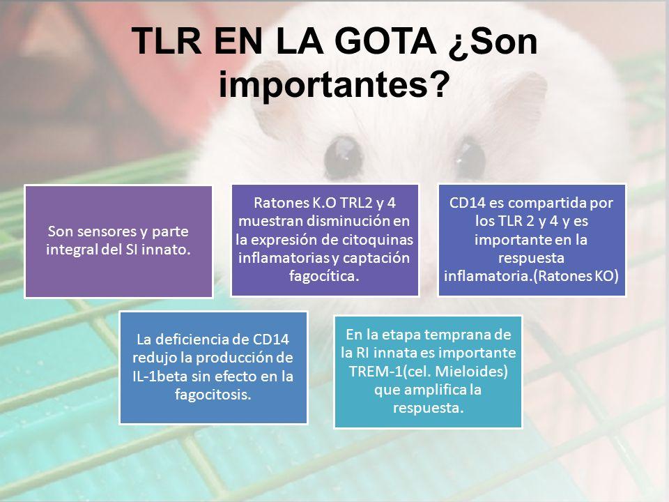 TLR EN LA GOTA ¿Son importantes.Son sensores y parte integral del SI innato.