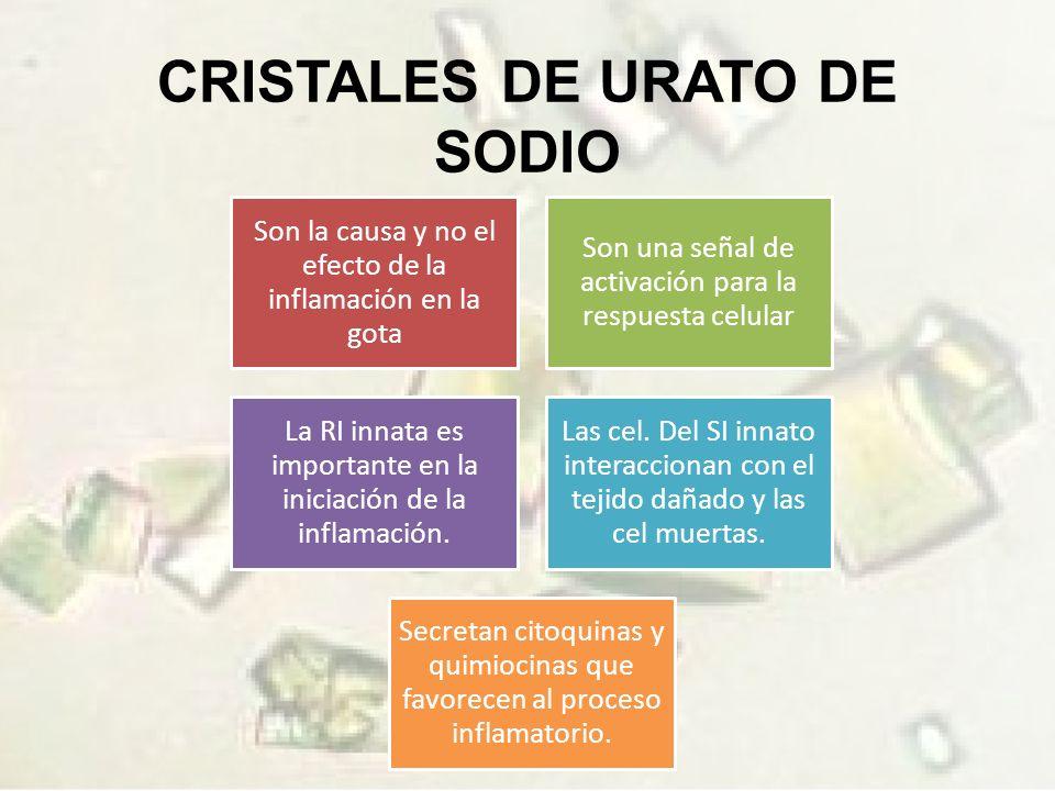 CRISTALES DE URATO DE SODIO Son la causa y no el efecto de la inflamación en la gota Son una señal de activación para la respuesta celular La RI innata es importante en la iniciación de la inflamación.