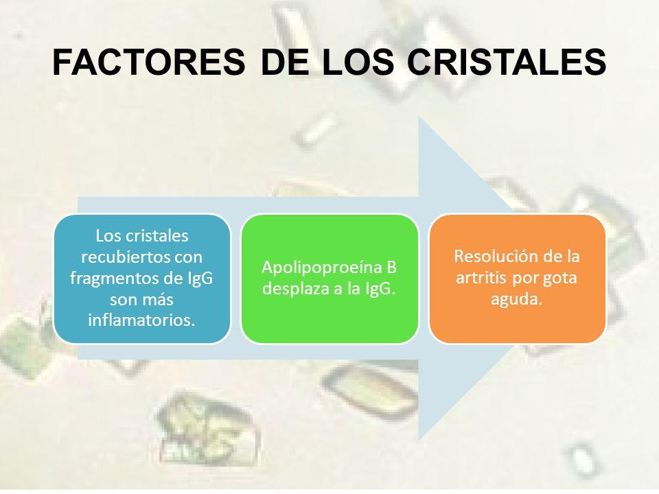 FACTORES DE LOS CRISTALES Los cristales recubiertos con fragmentos de IgG son más inflamatorios.