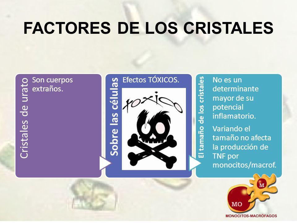TIPOS DE CÉLULAS Las más estudiadas son neutrófilos y macrófagos.