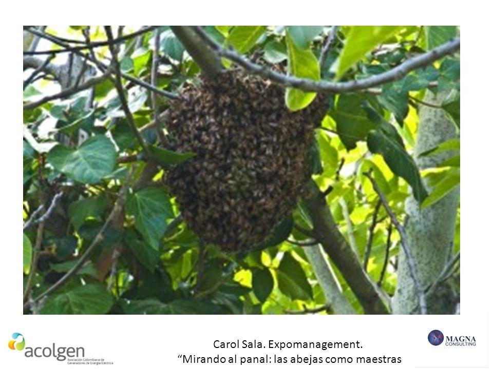 Carol Sala. Expomanagement. Mirando al panal: las abejas como maestras