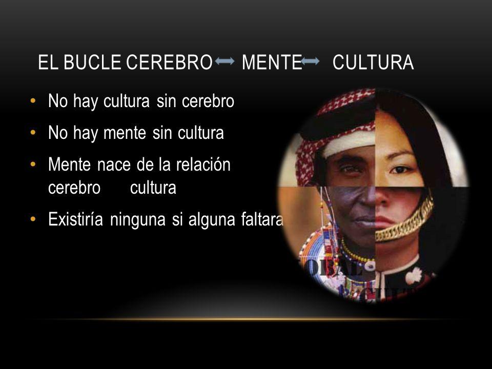 EL BUCLE CEREBRO MENTE CULTURA No hay cultura sin cerebro No hay mente sin cultura Mente nace de la relación cerebro cultura Existiría ninguna si algu