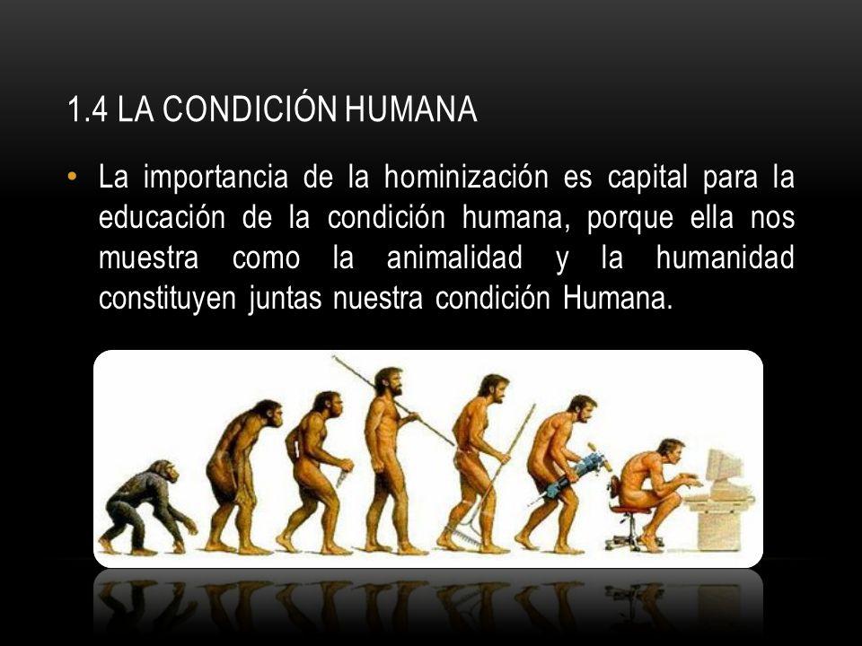 1.4 LA CONDICIÓN HUMANA La importancia de la hominización es capital para la educación de la condición humana, porque ella nos muestra como la animali