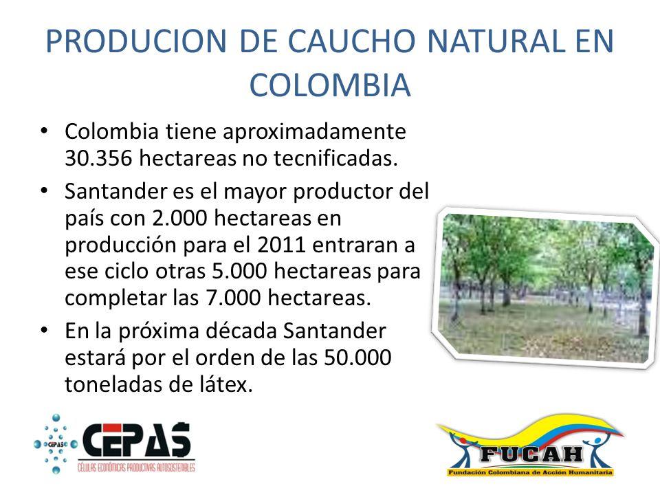 PRODUCION DE CAUCHO NATURAL EN COLOMBIA Colombia tiene aproximadamente 30.356 hectareas no tecnificadas. Santander es el mayor productor del país con
