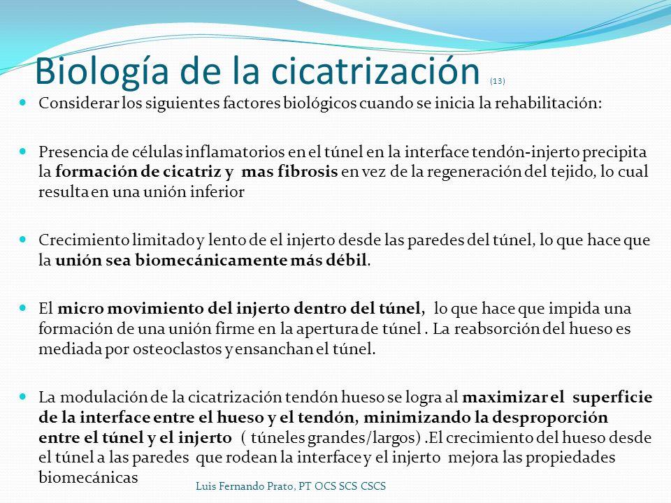 Biología de la cicatrización (13) Considerar los siguientes factores biológicos cuando se inicia la rehabilitación: Presencia de células inflamatorios