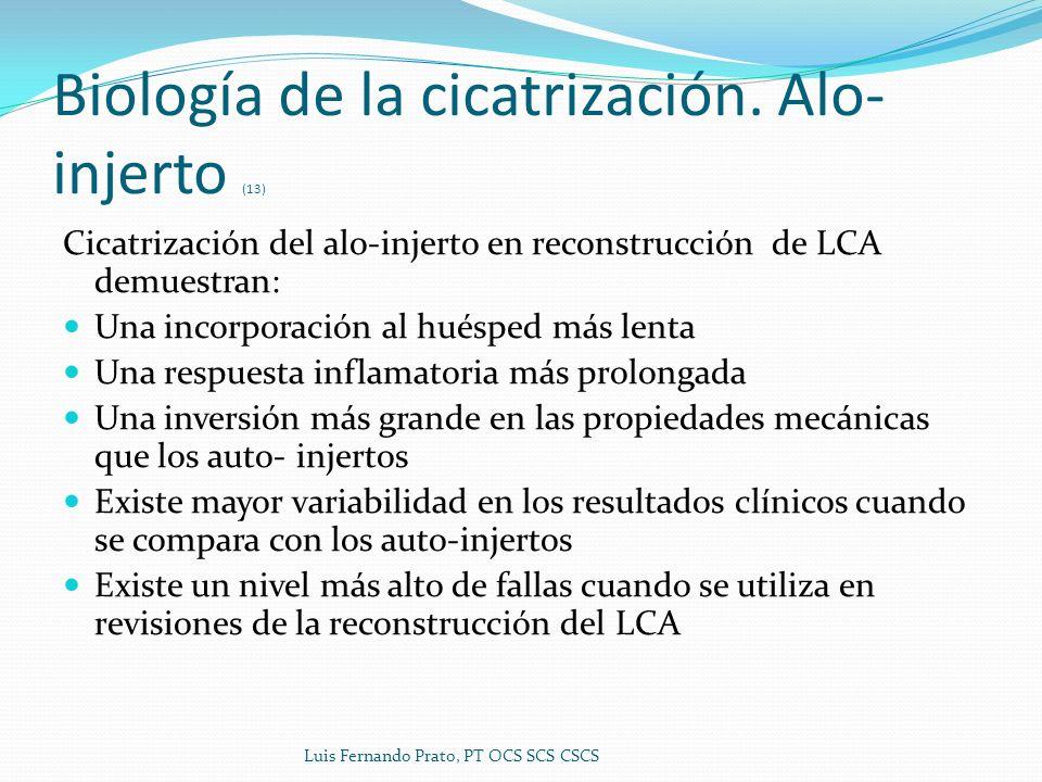 Biología de la cicatrización. Alo- injerto (13) Cicatrización del alo-injerto en reconstrucción de LCA demuestran: Una incorporación al huésped más le