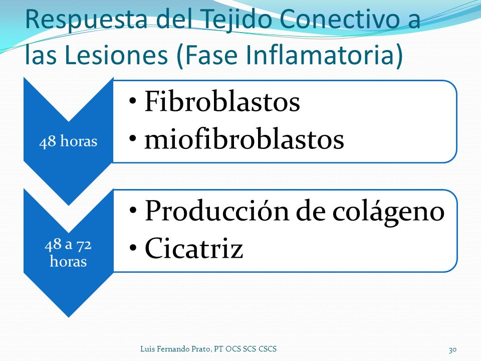 48 horas Fibroblastos miofibroblastos 48 a 72 horas Producción de colágeno Cicatriz Respuesta del Tejido Conectivo a las Lesiones (Fase Inflamatoria)