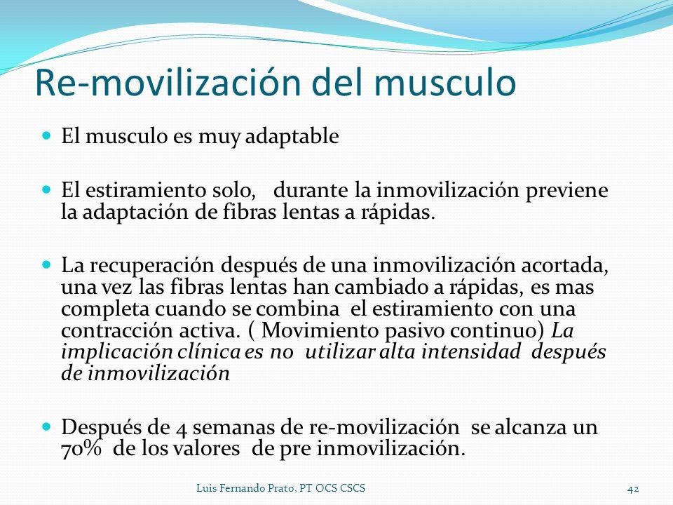 El musculo es muy adaptable El estiramiento solo, durante la inmovilización previene la adaptación de fibras lentas a rápidas. La recuperación después