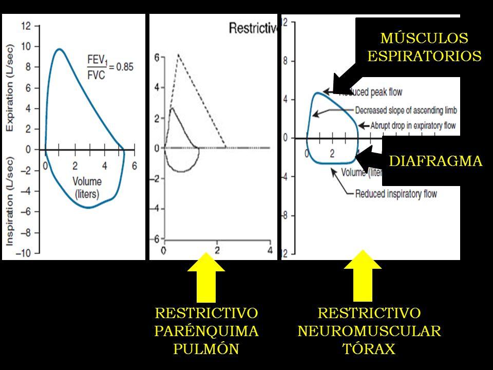RESTRICTIVO PARÉNQUIMA PULMÓN RESTRICTIVO NEUROMUSCULAR TÓRAX MÚSCULOS ESPIRATORIOS DIAFRAGMA