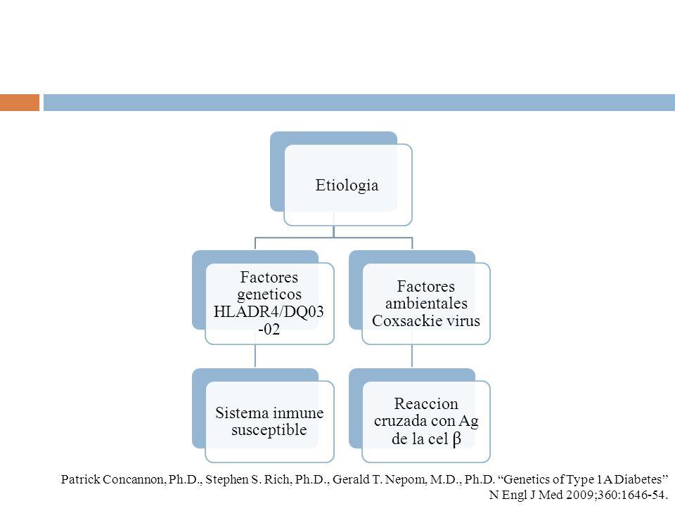 Etiologia Factores geneticos HLADR4/DQ03 -02 Sistema inmune susceptible Factores ambientales Coxsackie virus Reaccion cruzada con Ag de la cel β Patri