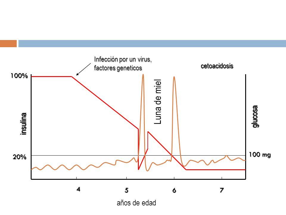 4 657 insulina glucosa 100% 20% 100 mg Infección por un virus, factores geneticos cetoacidosis años de edad Luna de miel