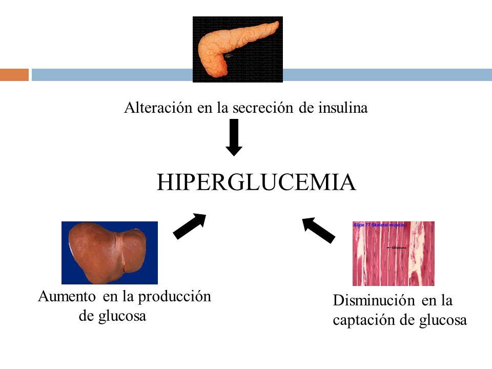 HIPERGLUCEMIA Alteración en la secreción de insulina Disminución en la captación de glucosa Aumento en la producción de glucosa