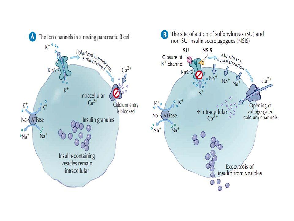 Miméticos de GLP1 Aislada en las secreciones salivales del Heloderma suspectum La exenatida y el GLP1 comparten el 53% de su secuencia de aminoácidos Resistente al metabolismo por la DPP IV