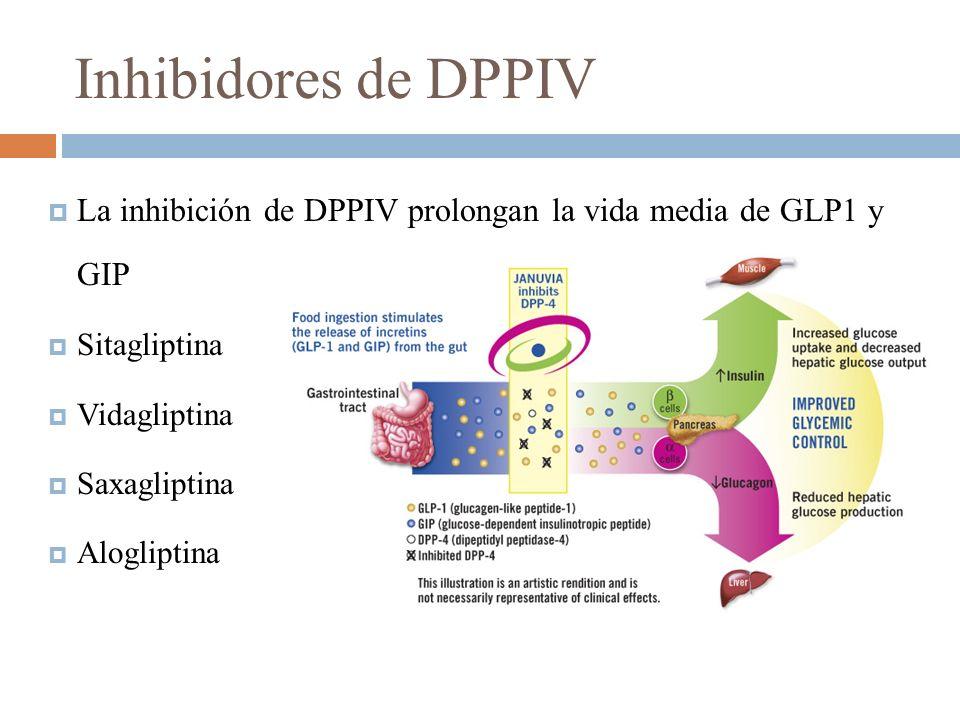 Inhibidores de DPPIV La inhibición de DPPIV prolongan la vida media de GLP1 y GIP Sitagliptina Vidagliptina Saxagliptina Alogliptina