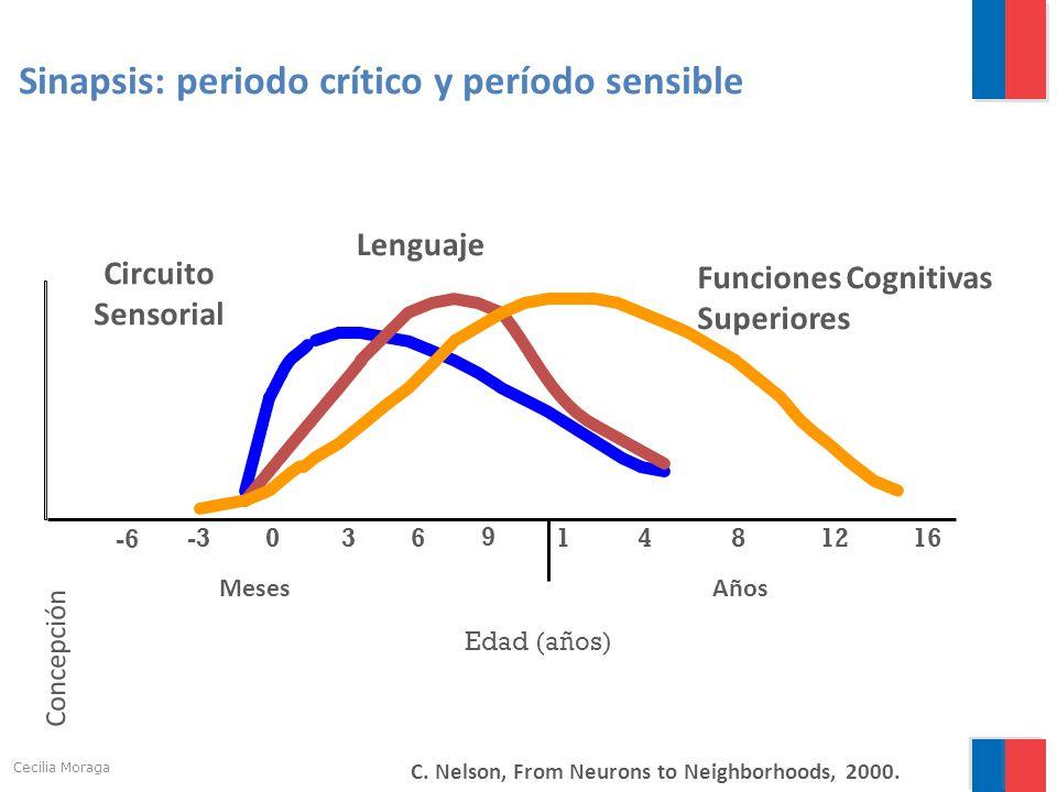 0 1 481216 Edad (años) Sinapsis: periodo crítico y período sensible Lenguaje Funciones Cognitivas Superiores 3 6 9 -3 -6 MesesAños C. Nelson, From Neu