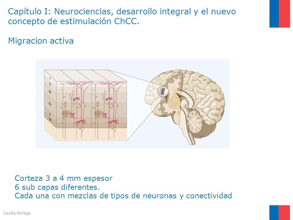 Capítulo I: Neurociencias, desarrollo integral y el nuevo concepto de estimulación ChCC. Migracion activa Corteza 3 a 4 mm espesor 6 sub capas diferen