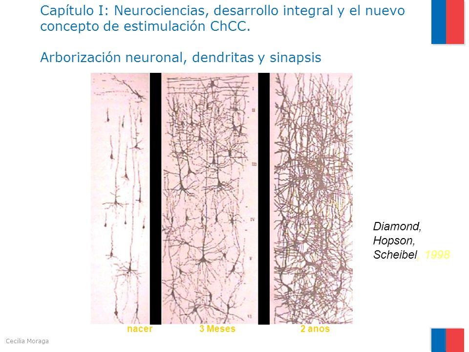 Capítulo I: Neurociencias, desarrollo integral y el nuevo concepto de estimulación ChCC. Arborización neuronal, dendritas y sinapsis Diamond, Hopson,