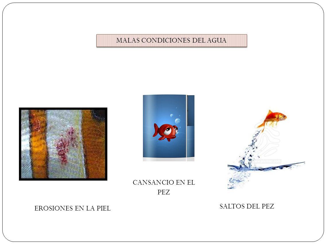 MALAS CONDICIONES DEL AGUA EROSIONES EN LA PIEL SALTOS DEL PEZ CANSANCIO EN EL PEZ